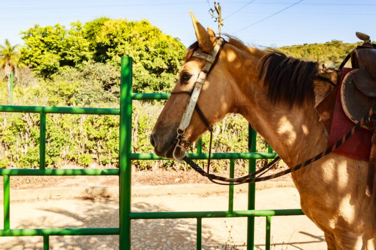 Cavalo marrom encilhado de perfil. Remete a passeio a cavalo uma das opções de lazer do hotel