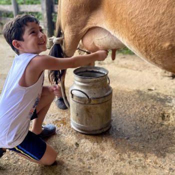 Um menino tira leite ao pé da vaca no Hotel Fazenda Tucano próximo a bh