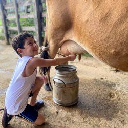 Menino tira leite ao pé da vaca